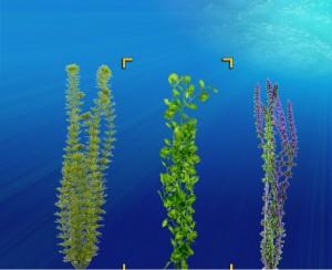 seaplants